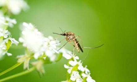 Что означает образ комара во сне – толкования по сонникам и согласно народным поверьям. к чему снится комары кусают — толкование сна по сонникам