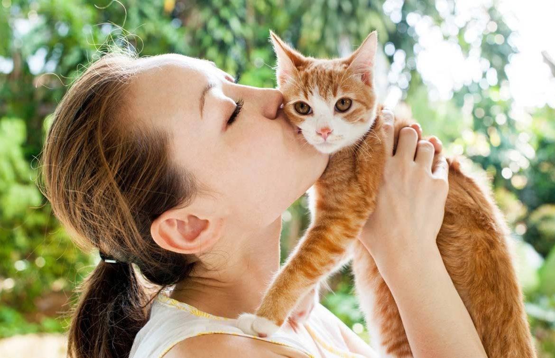 Кошачьи блохи: есть ли опасность для человека