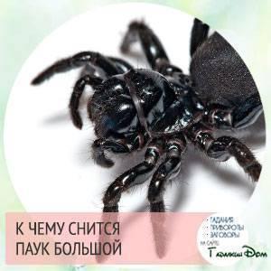Много больших пауков