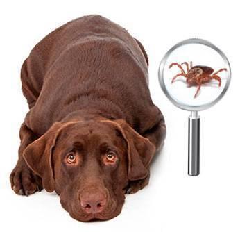 Прививка для собак от клеща