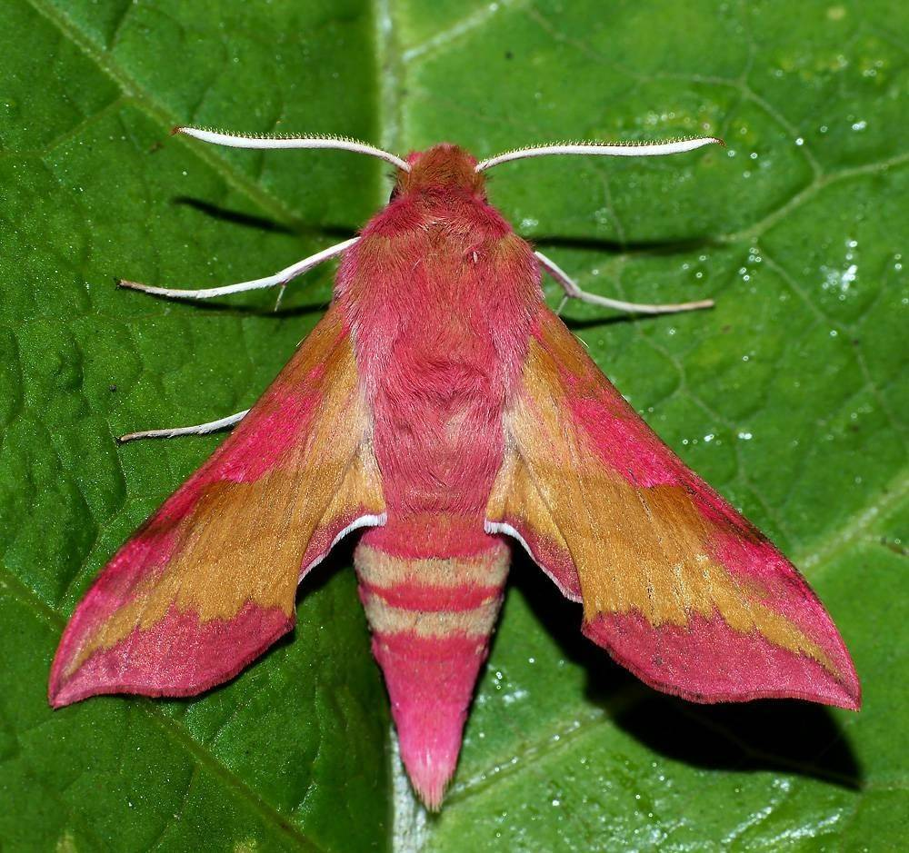 Бабочка – самое красивое насекомое в мире