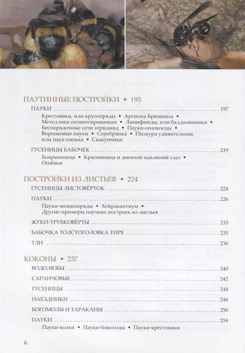 Трубковерт многоядный или грушевый byctiscus betu ae
