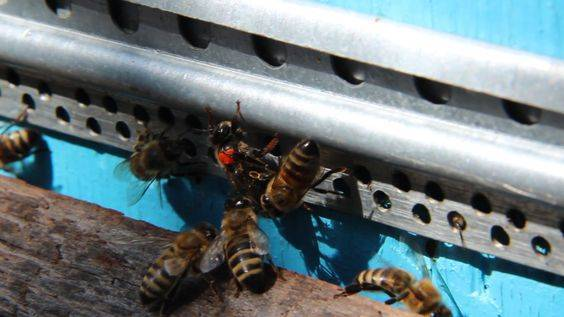 Как избавиться от муравьёв в саду и огороде