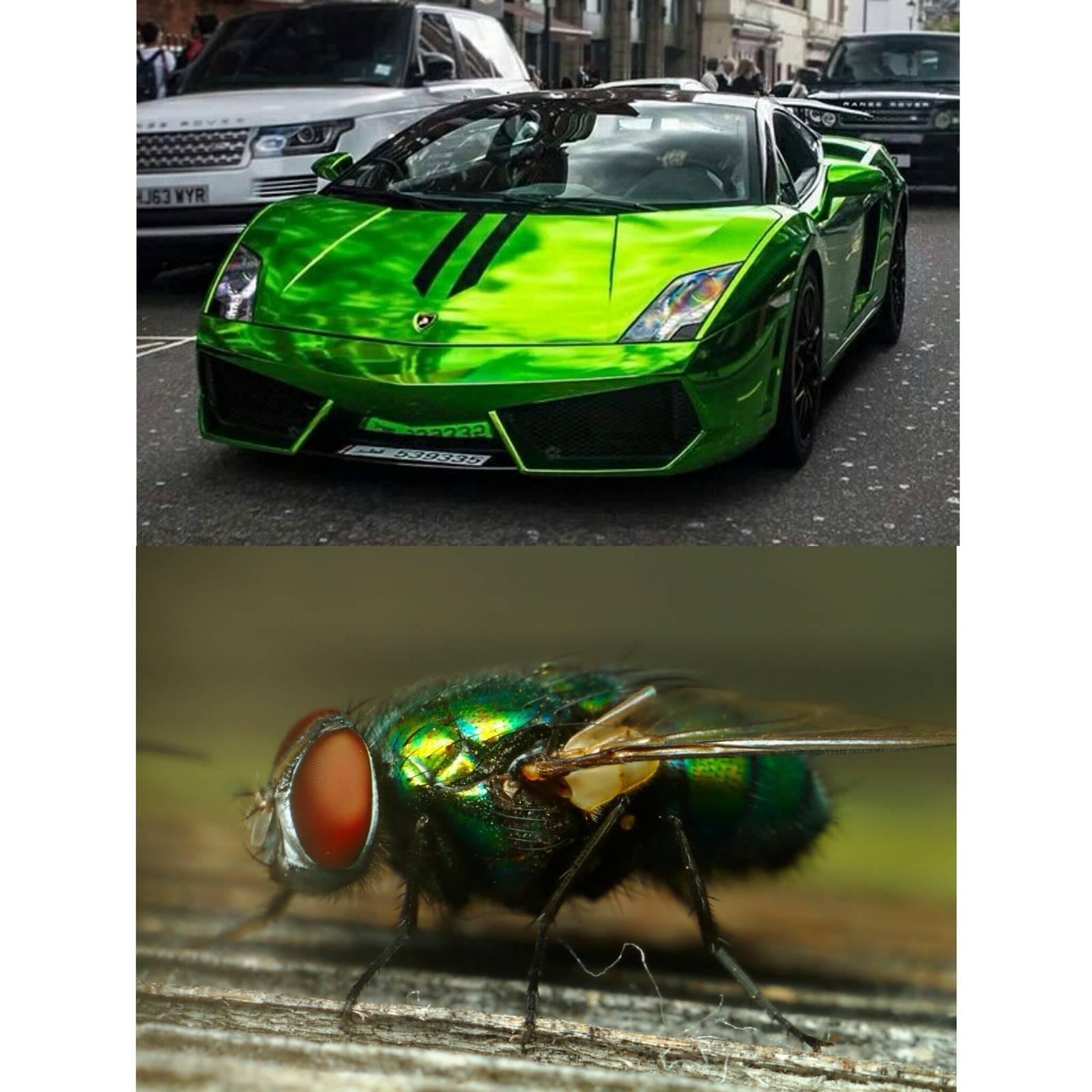 Падальные мухи: способы защиты