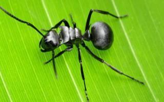 Приснились муравьи: что значит по соннику?