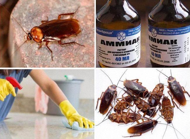 От чего дохнут тараканы
