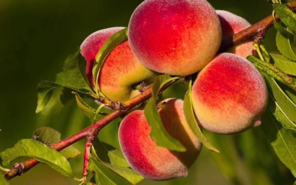 Паутина на яблонях – как бороться