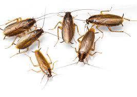 16 лучших средств от тараканов
