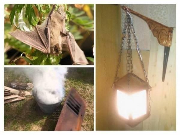 Как избавиться от летучих мышей, поселившихся на чердаке или залетевших в квартиру