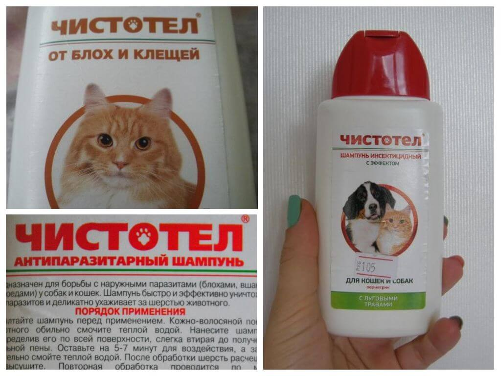 От блох шампунь для котят какой выбрать — отзывы про шампунь от блох