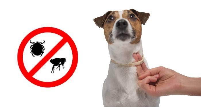 Современные средства от блох для собак