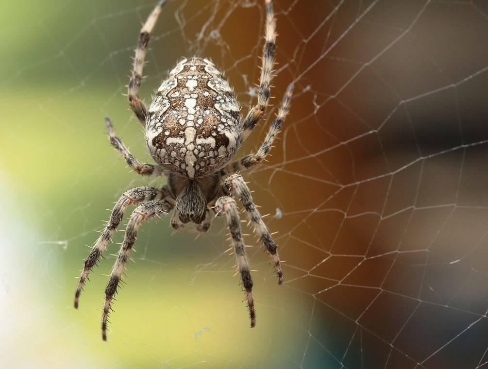 Что делать если укусил паук-крестовик: первая помощь и дальнейшее лечение