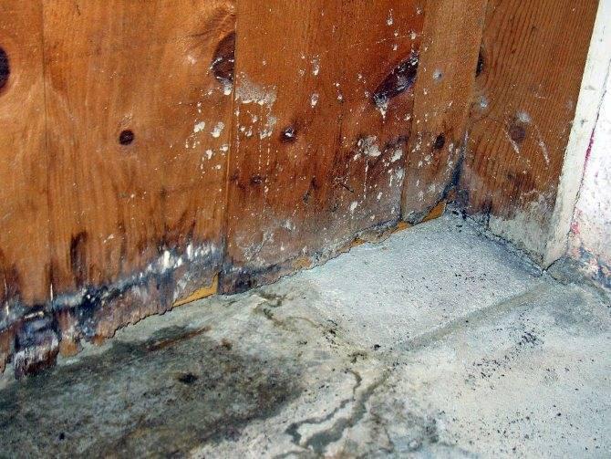 Избавление от плесени в погребе, подвале и антигрибковая обработка древесины