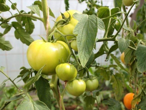 Обработка клубники содой пищевой. применение пищевой соды на огороде, как удобрения и защиты растений от вредителей.