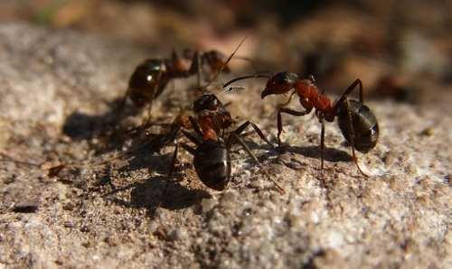 Фоллаут 3 источник огненных муравьев. огненные муравьи. образ жизни и среда обитания огненных муравьёв. список побочных квестов