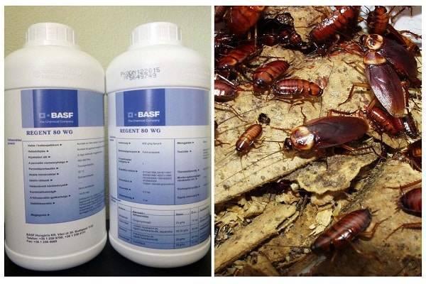Применение препарата Регент от колорадского жука