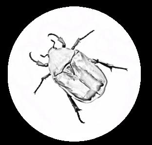 Жук носорог в доме как избавиться. как избавиться от жуков