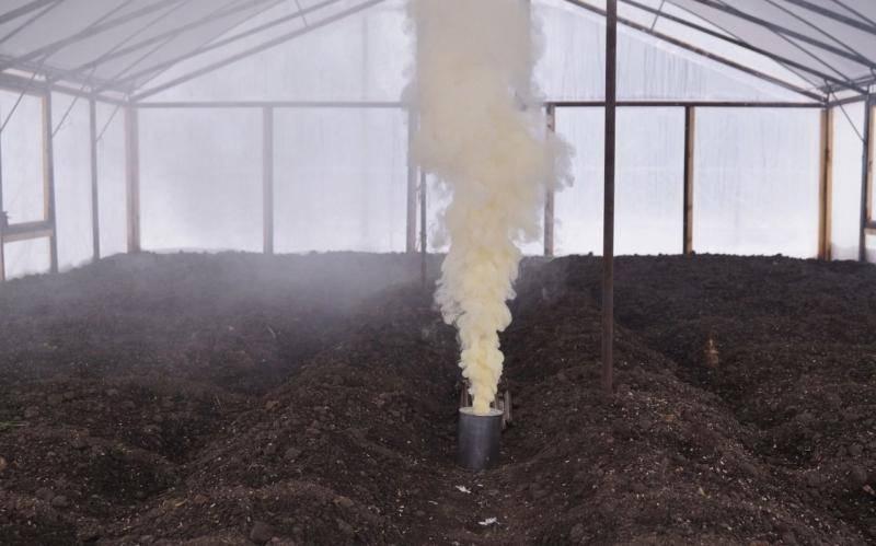 Как бороться с паутинным клещом в теплице, методы обработки