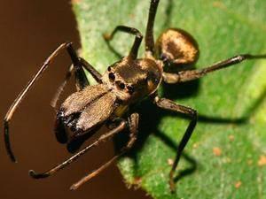 Ноги паукообразных – описание, особенности строения и количество