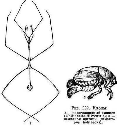 Отряд полужесткокрылыеклопы описание