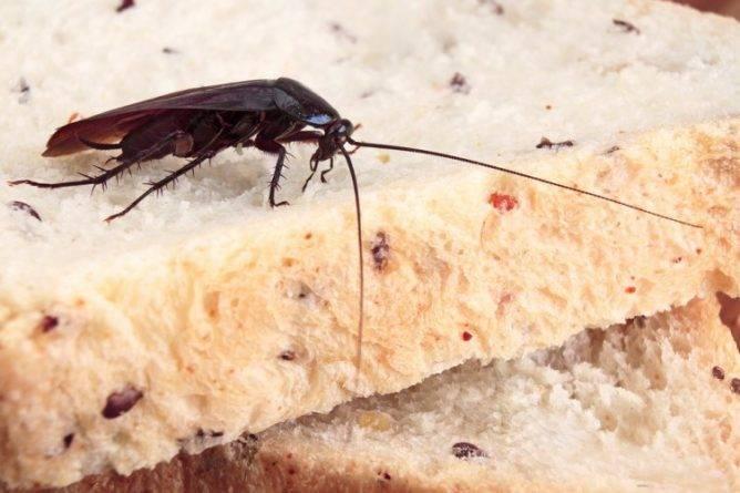 Чем травить тараканов в общаге: доступные и эффективные средства