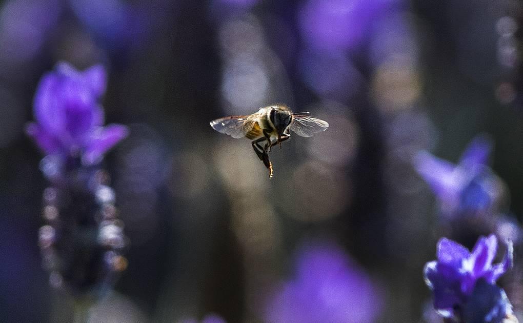 Что произойдет, если вымрут пчелы?