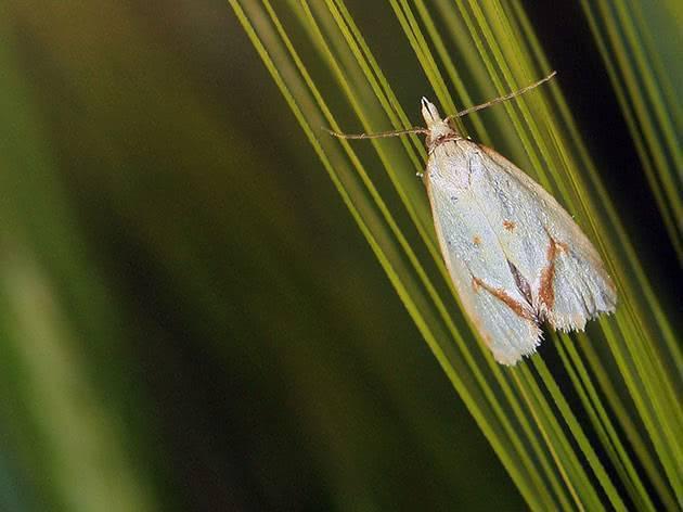 Борьба с белокрылкой народными средствами в огороде