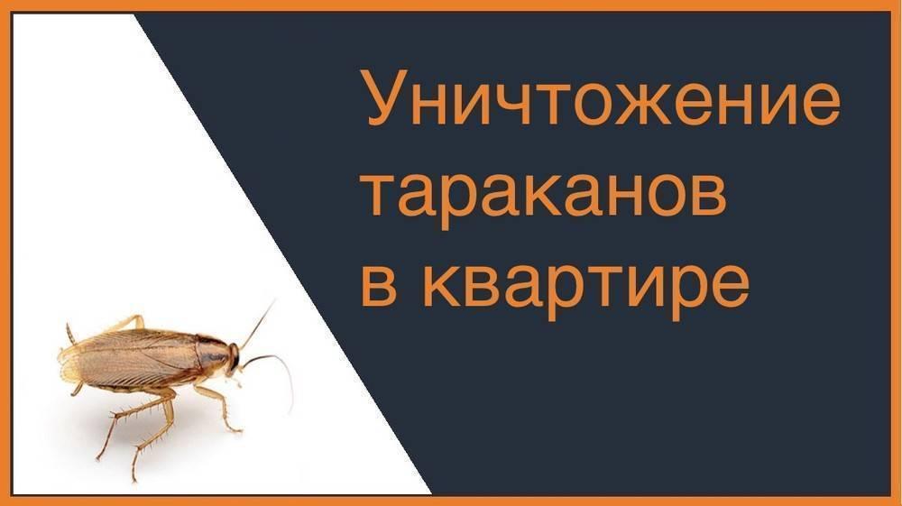 Дезинсекция тараканов: что это такое, как проходит и во сколько обойдётся