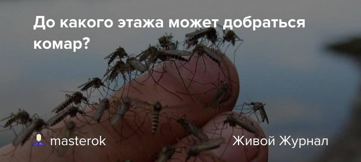 Как высоко летают комары и мухи. интересный вопрос - до какого этажа долетают комары? на какую высоту могут взлетать комары
