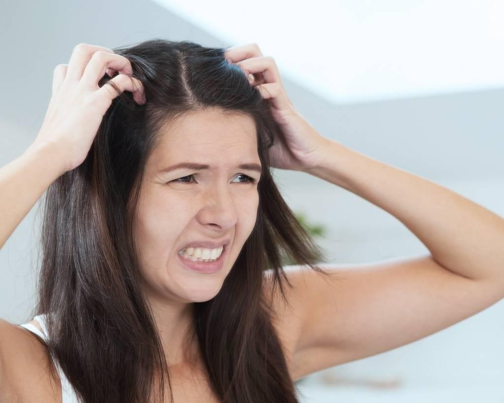 К чему снятся вши в волосах. к чему снятся вши по версии сонников миллера, ванги и прочих