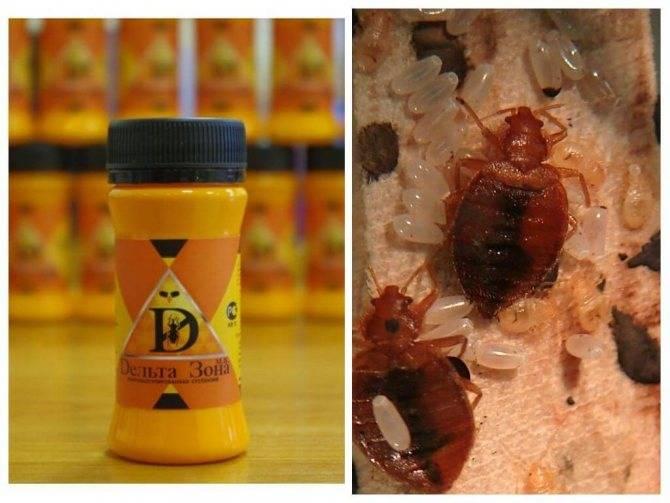 Ксулат и отзывы о его применении от клопов и тараканов, где купить