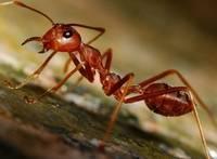 Сколько ног у муравья и паука?