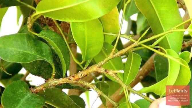 Проверенные методы борьбы с паутинным клещом на садовых деревьях