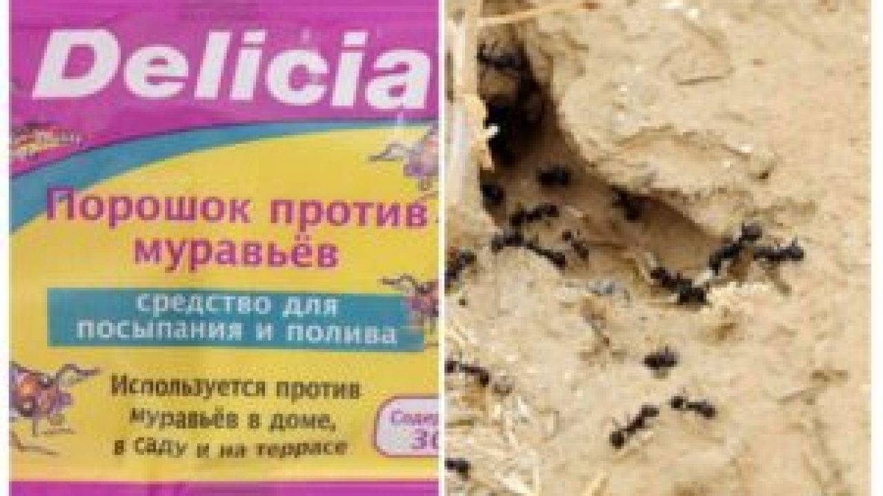 Зола от муравьев: помогает или нет в огороде и на участке