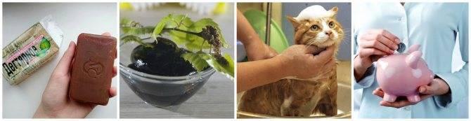 Можно ли мыть дегтярным мылом кошек и собак и помогает ли оно от блох