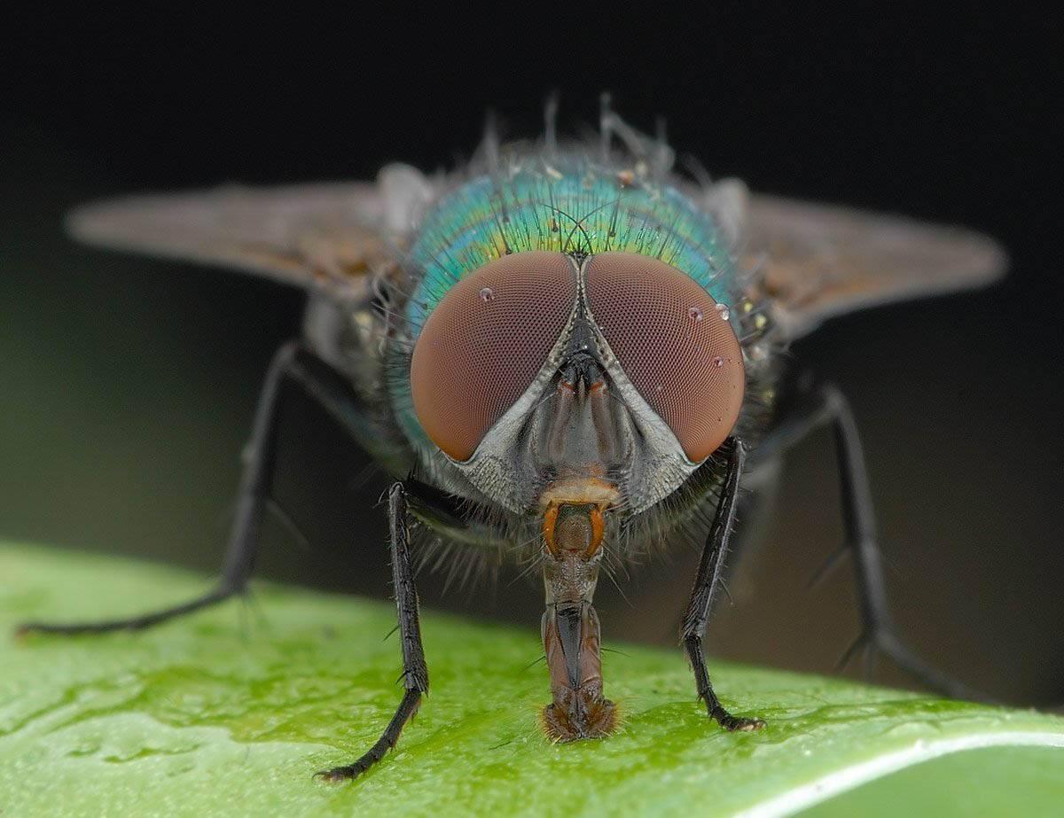Как муха держится на потолке? как муха садится и держится на потолок почему пауки не падают с потолка