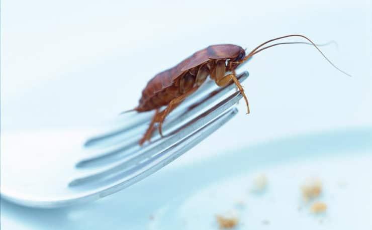 Самые большие и огромные тараканы в мире: названия, фото и описания