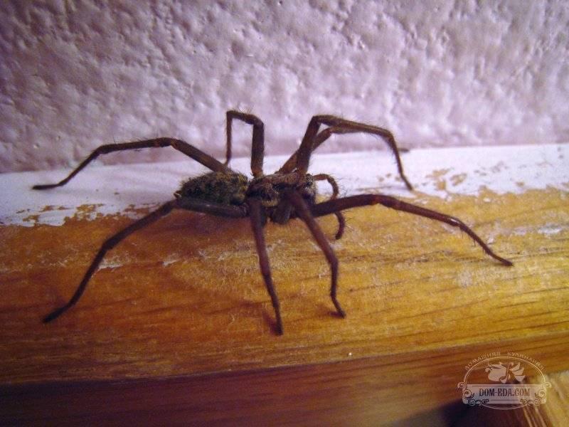 Избавляемся от нежеланных пауков в квартире