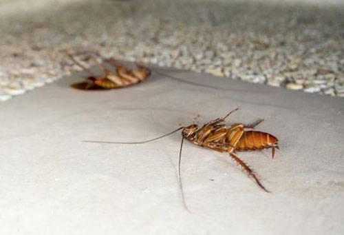 Ловушки raid max от тараканов
