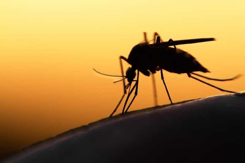 Что означает образ комара во сне – толкования по сонникам и согласно народным поверьям