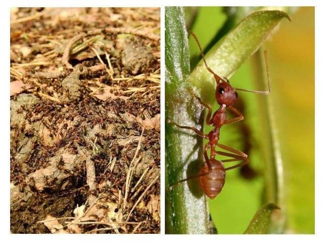 Какую пользу приносят муравьи?