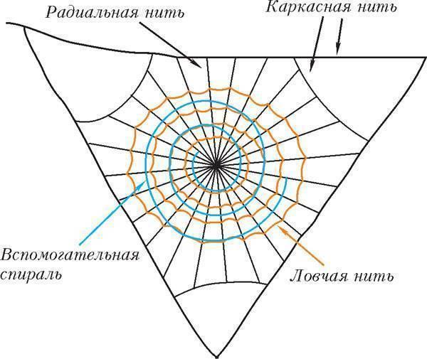 Что такое паутина, и почему пауки ее плетут. как паук плетет паутину, откуда берется паутинный шелк? знаешь ли ты почему пауки плетут паутину
