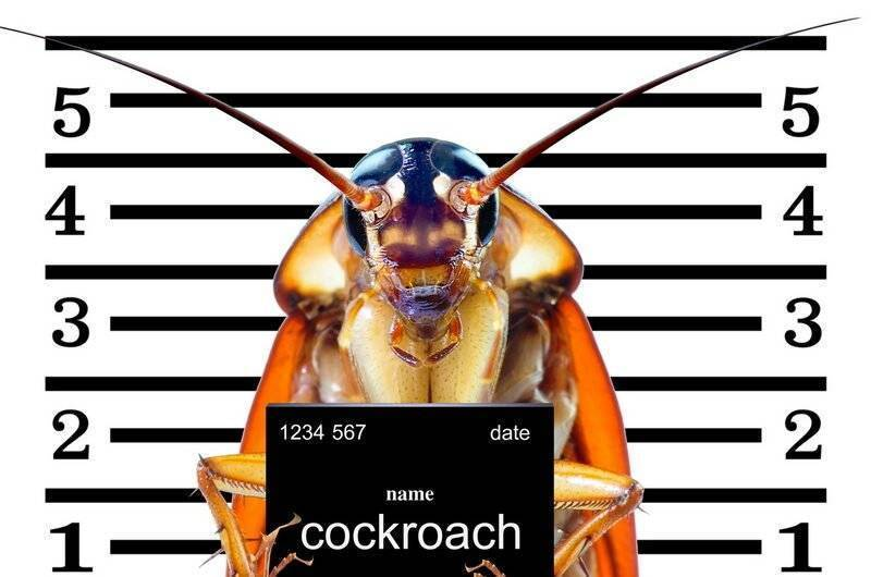 Где живут тараканы в квартире, частном доме, природе, как найти их гнездо. любимые места проживания тараканов: кухня, спальня, кладовая, плинтуса, микроволновка и другие