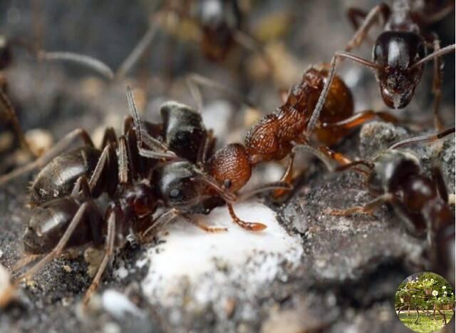 Как навсегда избавиться от муравьев в огороде