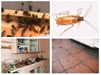 Инструкция по применению дуста от тараканов: как правильно использовать?