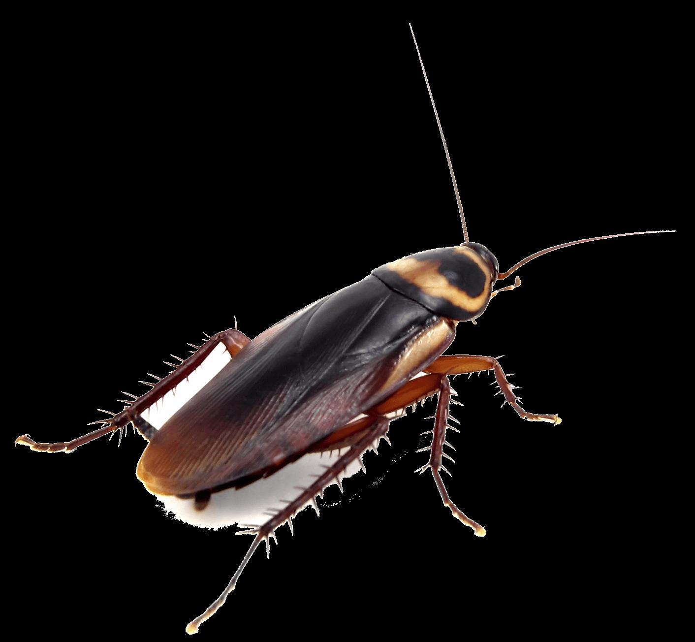 Эффективность дезинсекции от тараканов в квартире