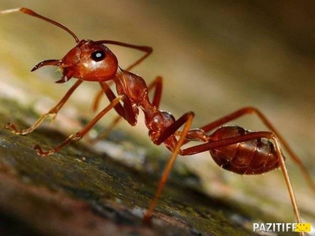 Что делают ночью муравьи