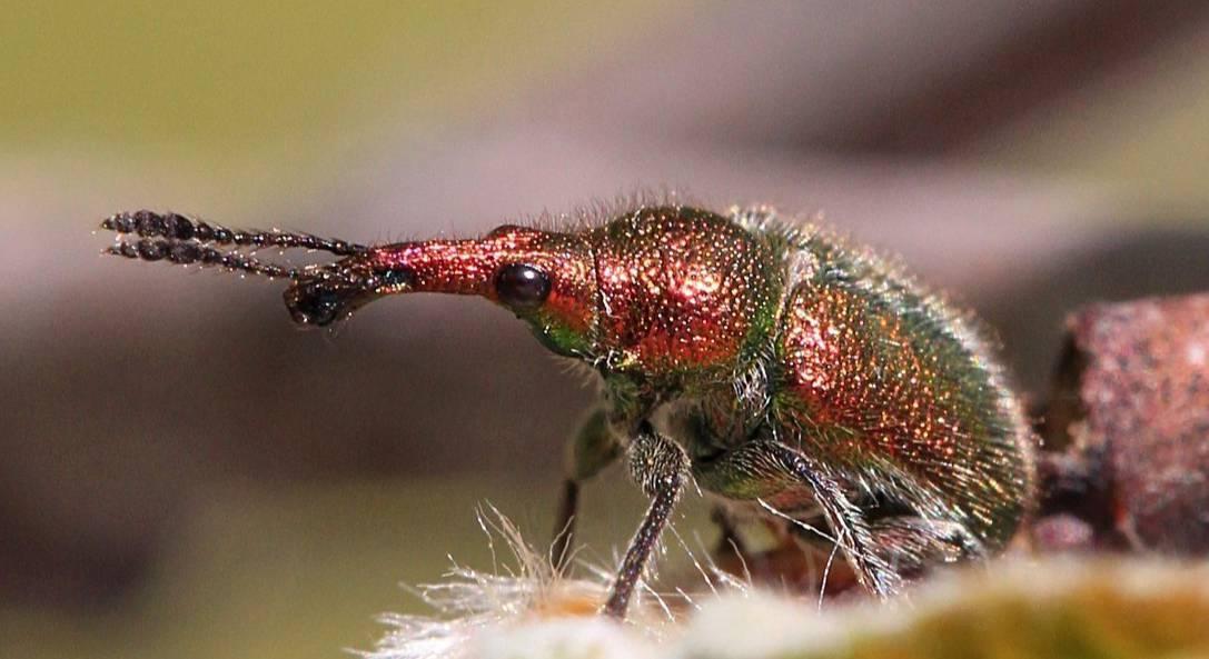 Вишневая муха — описание, методы борьбы