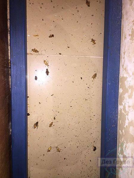 Как приготовить борную кислоту от тараканов