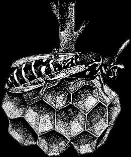 Как защитить яблоню и грушу от болезней и вредителей?